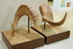sheep-horns